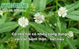 5 công dụng của cỏ Nhọ nồi (Cỏ mực) với bệnh tiết niệu