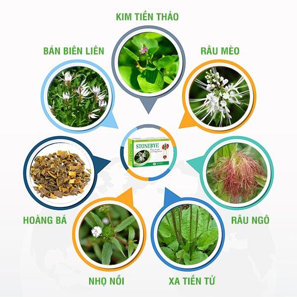 Công thức 7 thảo dược kết hợp với thuốc chữa viêm bàng quang mãn, viêm tiết niệu